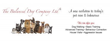 The Balanced Dog Company Ltd